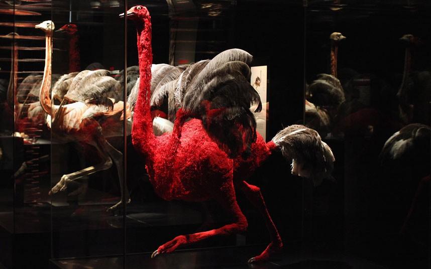1425 Животные изнутри: пластинация