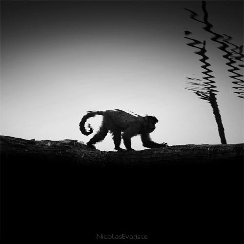 143 Темный зоопарк Ника Эваристе