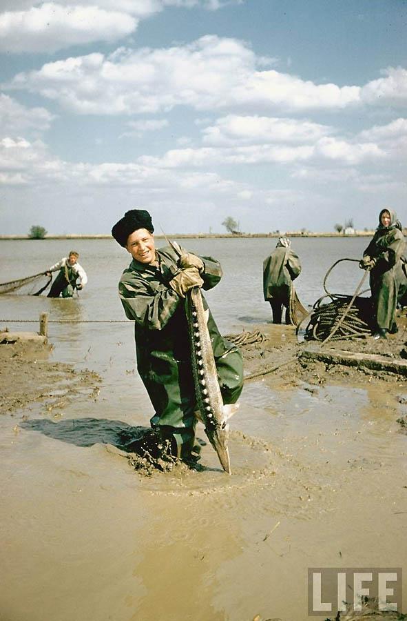 1437 Добыча черной икры в СССР 60 х