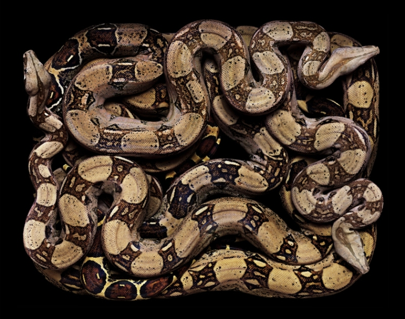 1471 Змеиная коллекция Гвидо Мокафико
