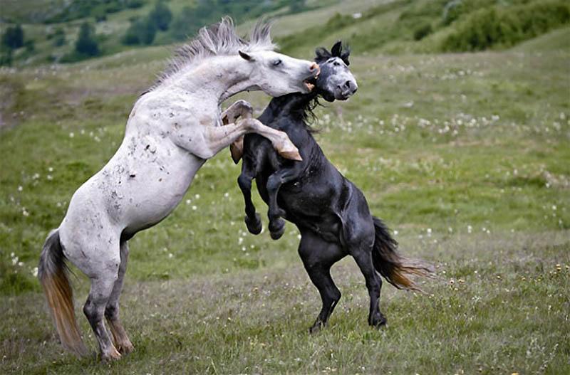 1488 40 самых удачных фотографий животных, сделанных в нужный момент