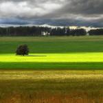 Одинокие деревья на полях