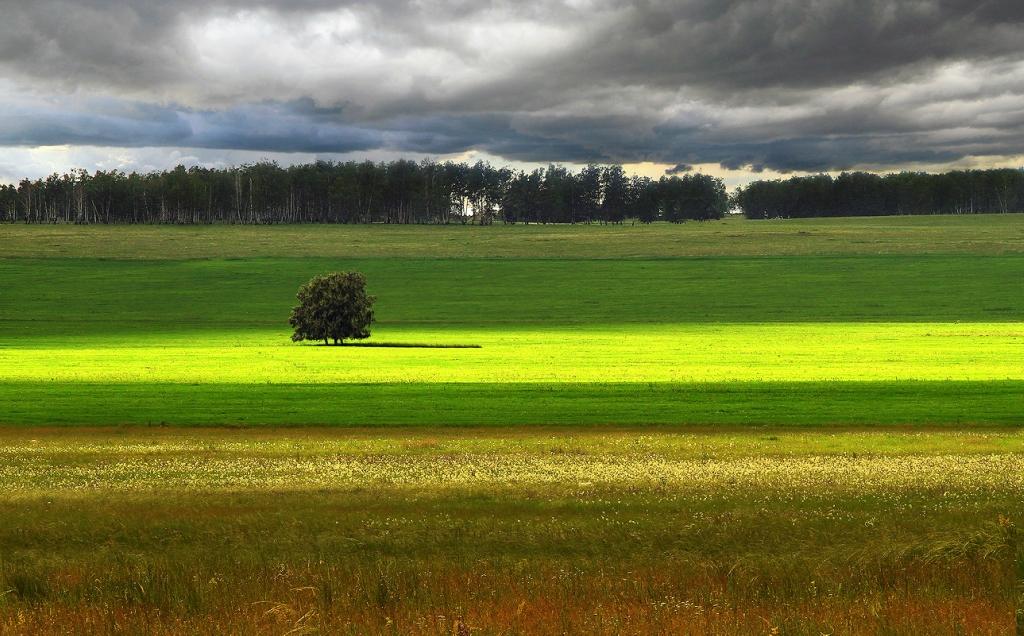1498 Одинокие деревья на полях