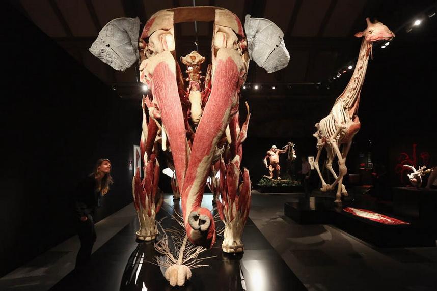 1524 Животные изнутри: пластинация