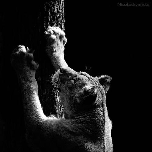 153 Темный зоопарк Ника Эваристе
