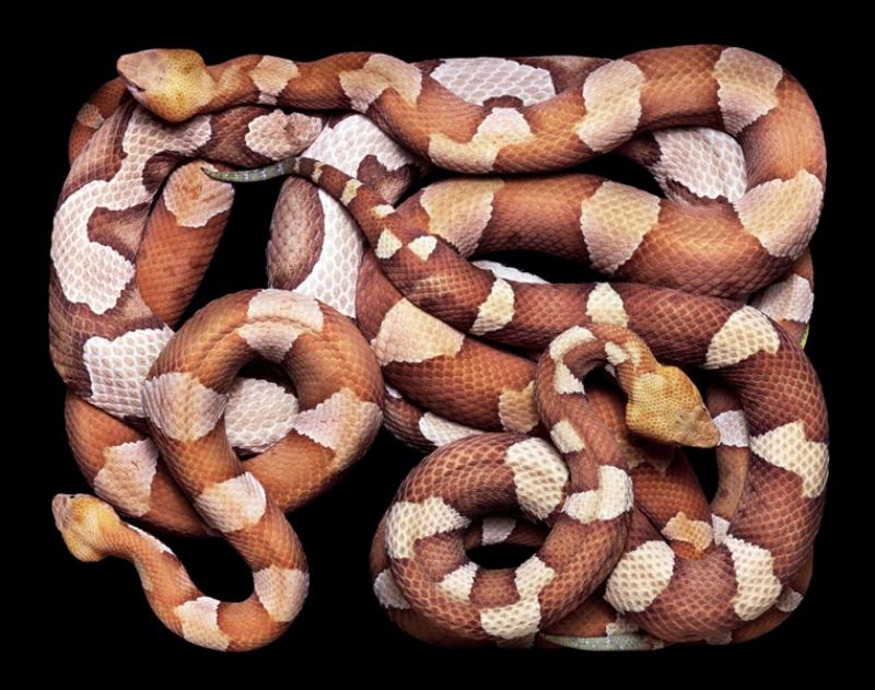 1564 Змеиная коллекция Гвидо Мокафико