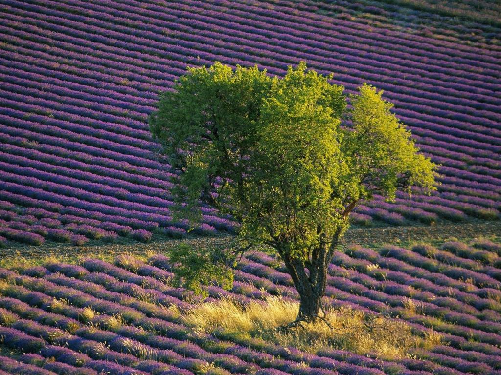 1679 Одинокие деревья на полях