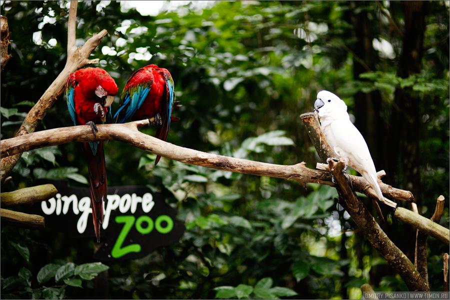 1694 Самый открытый зоопарк мира