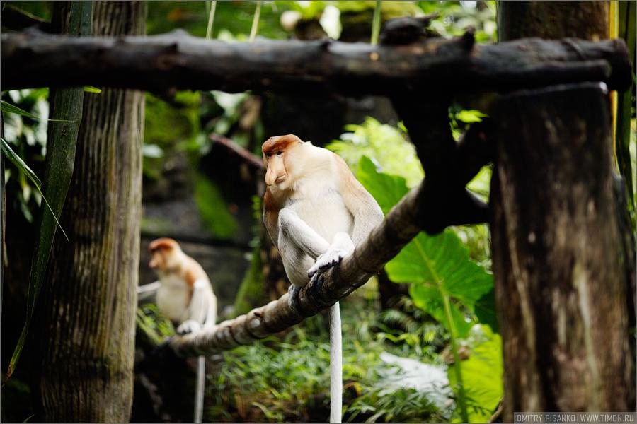1695 Самый открытый зоопарк мира