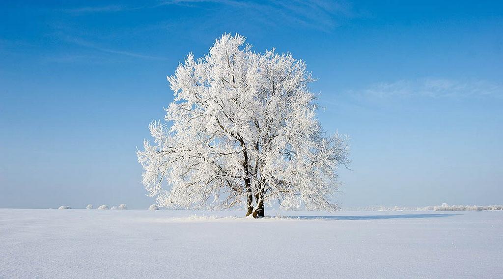 1775 Одинокие деревья на полях