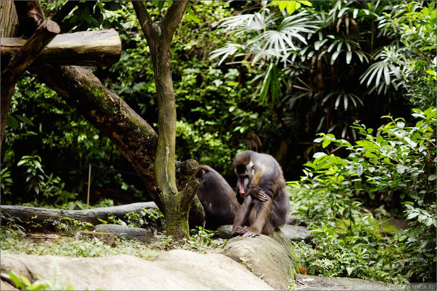 1884 Самый открытый зоопарк мира