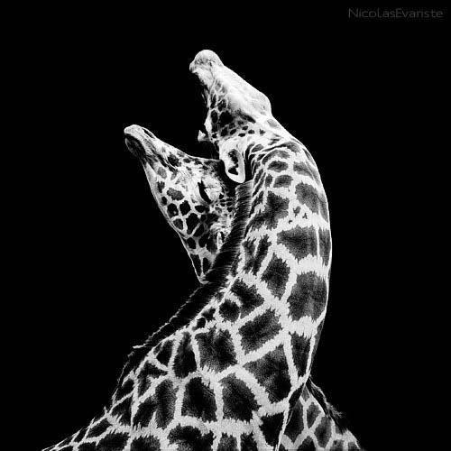 210 Темный зоопарк Ника Эваристе