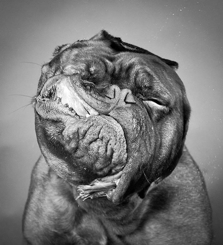 21110 40 самых удачных фотографий животных, сделанных в нужный момент