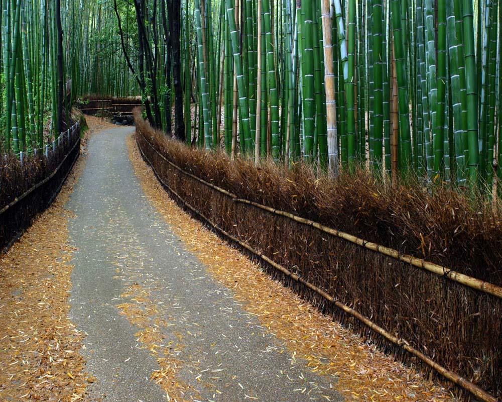 2175 Бамбуковый коридор у подножья горы в Киото