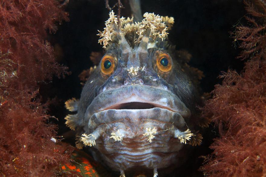 2177 Подводные чудеса Белого моря нафото Александра Семенова