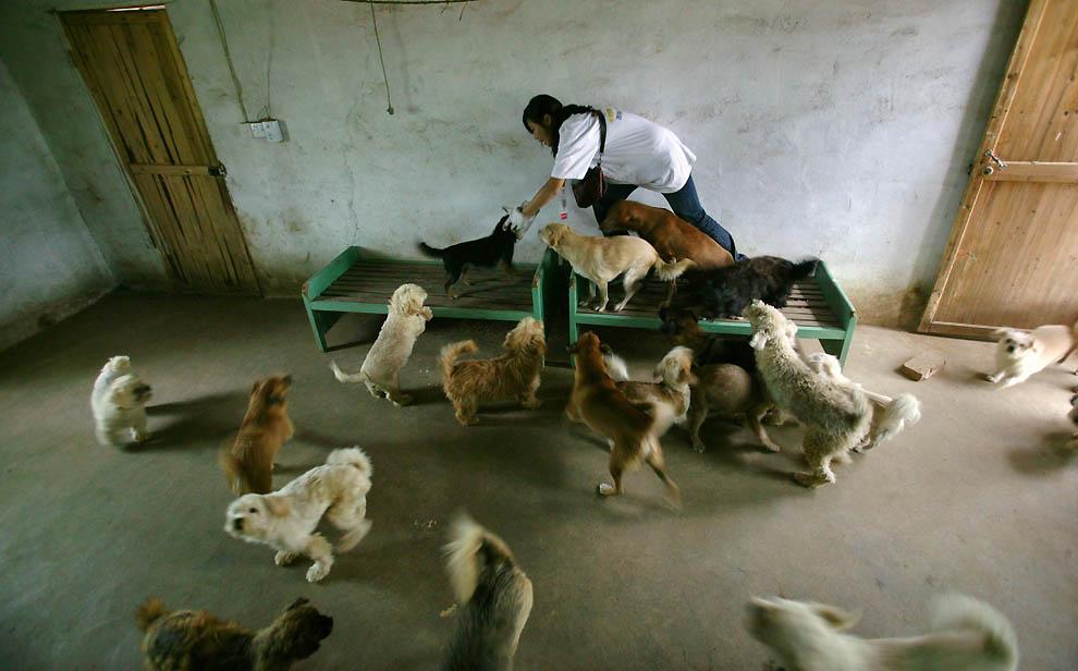 2192 Приют для бродячих животных в Нанкине