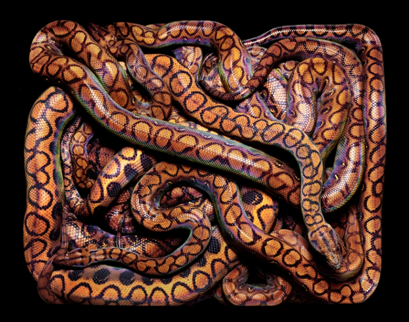2197 Змеиная коллекция Гвидо Мокафико