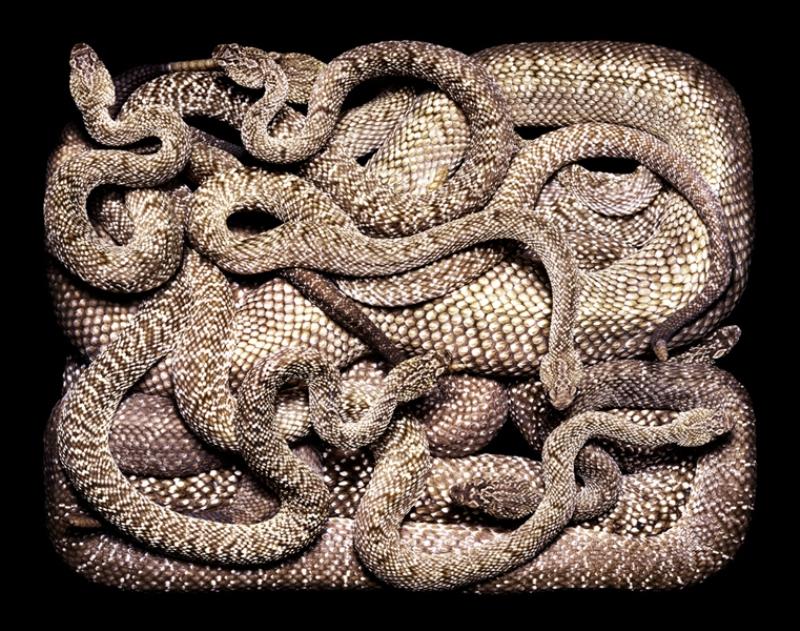 2198 Змеиная коллекция Гвидо Мокафико