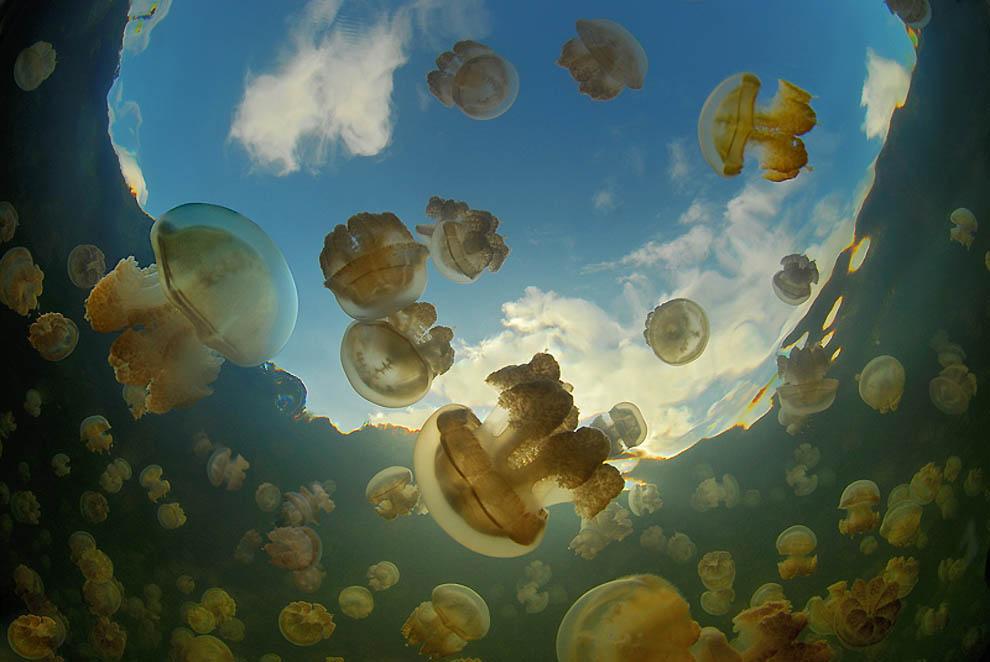 2201 Озеро медуз