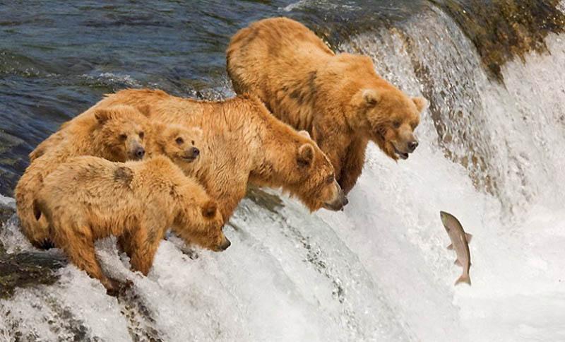 2259 40 самых удачных фотографий животных, сделанных в нужный момент