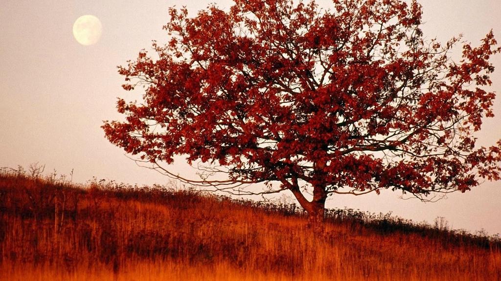 2275 Одинокие деревья на полях
