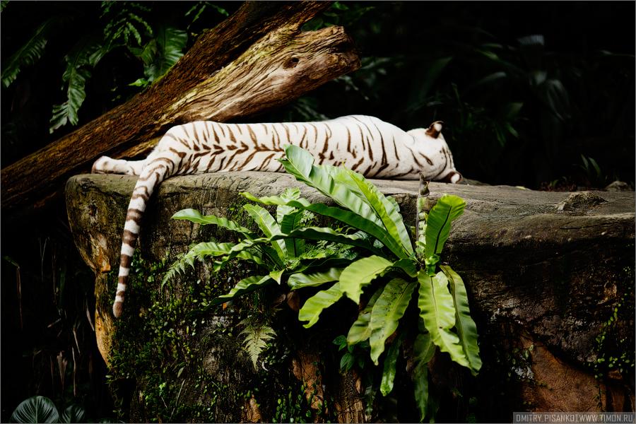 2305 Самый открытый зоопарк мира