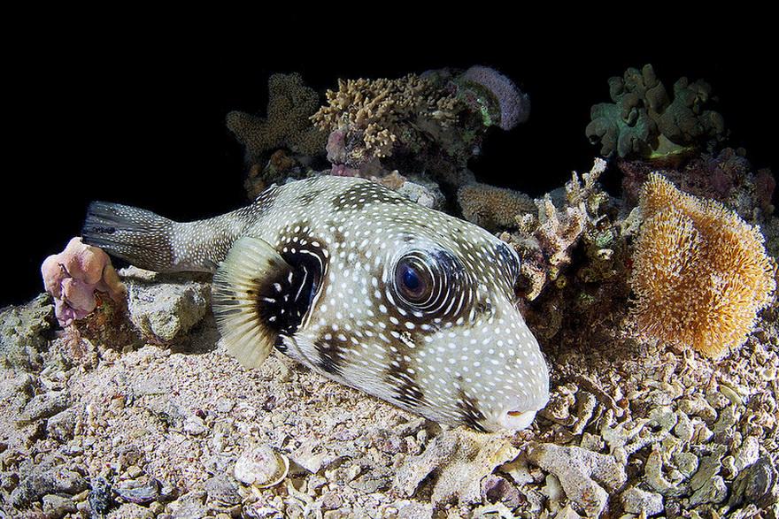 2331 Подводные чудеса Белого моря на фото Александра Семенова