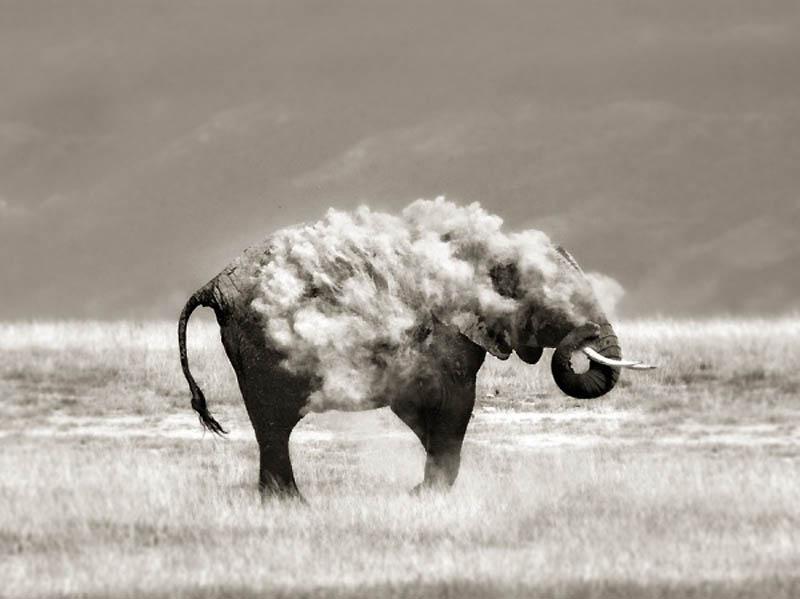 2443 40 самых удачных фотографий животных, сделанных в нужный момент