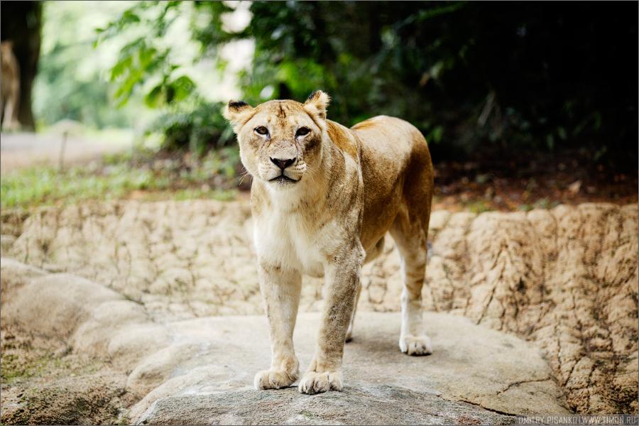 2454 Самый открытый зоопарк мира