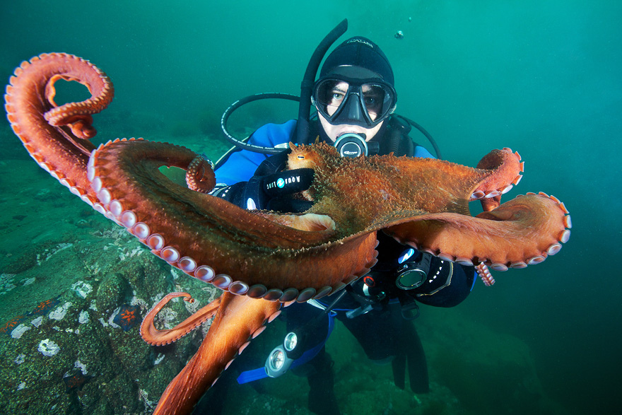 2525 Подводные чудеса Белого моря на фото Александра Семенова