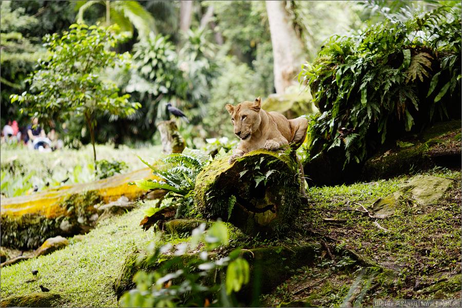 2549 Самый открытый зоопарк мира