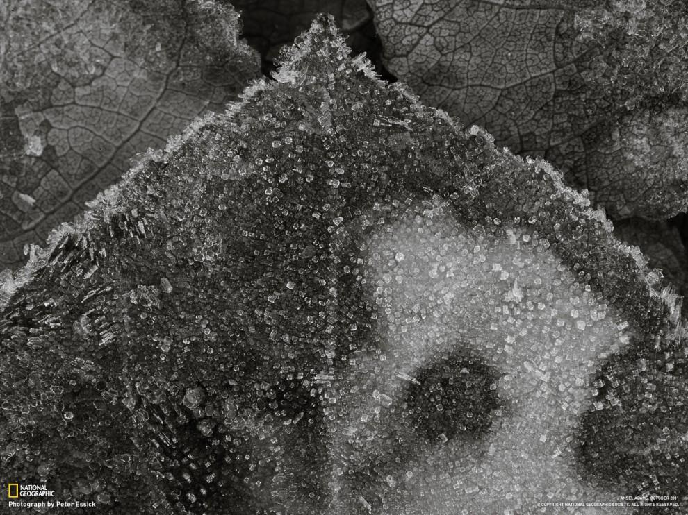 262 990x742 Обои длярабочего стола отNational Geographic замарт 2012