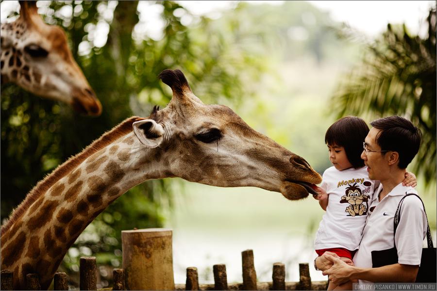 2642 Самый открытый зоопарк мира