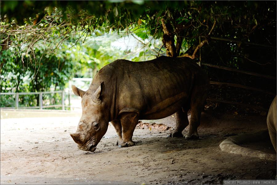 2740 Самый открытый зоопарк мира