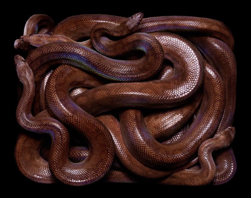 2822 Змеиная коллекция Гвидо Мокафико