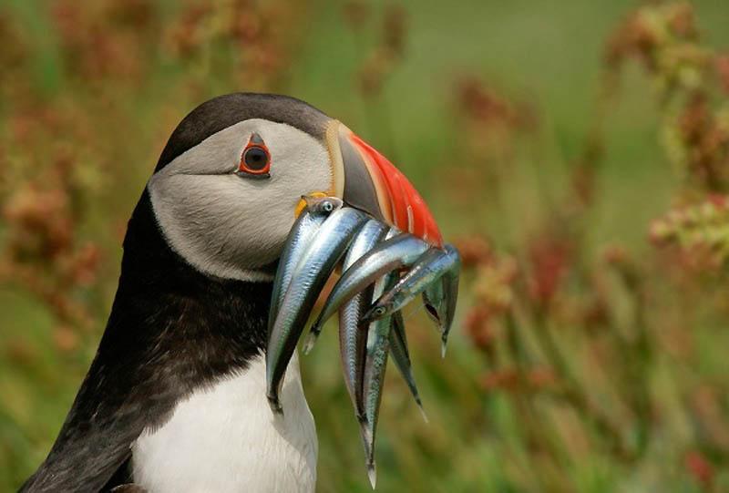 2830 40 самых удачных фотографий животных, сделанных в нужный момент