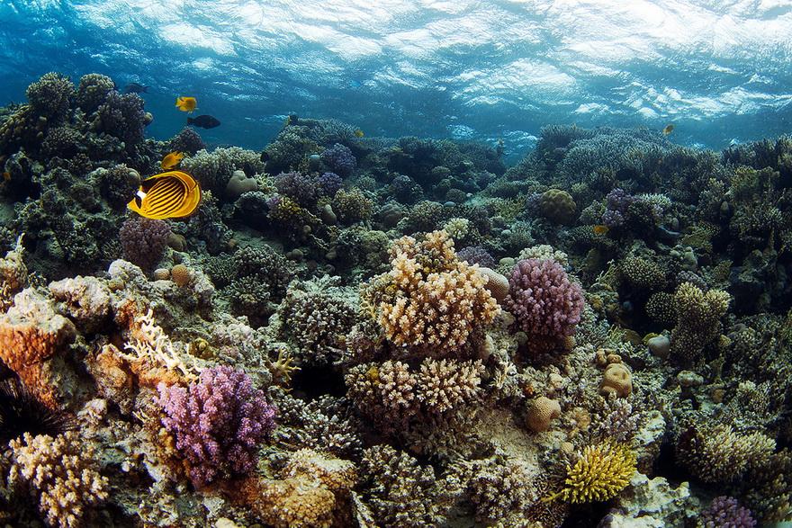3014 Подводные чудеса Белого моря на фото Александра Семенова