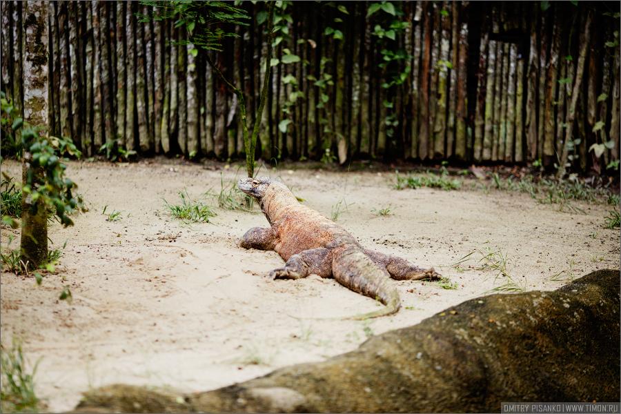 3033 Самый открытый зоопарк мира