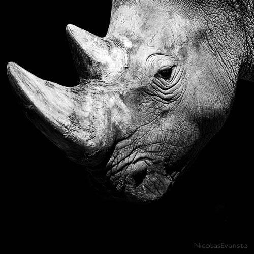 310 Темный зоопарк Ника Эваристе