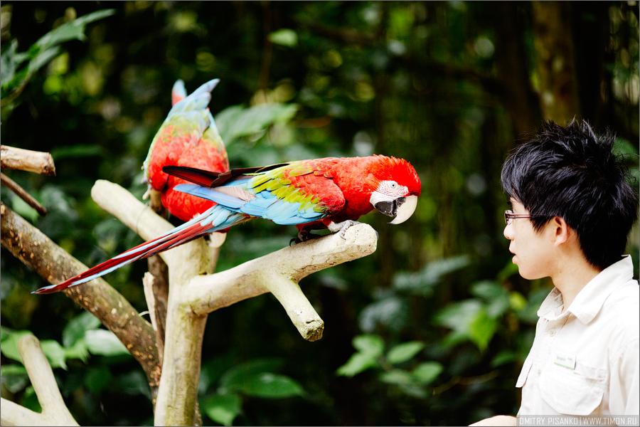 31105 Самый открытый зоопарк мира