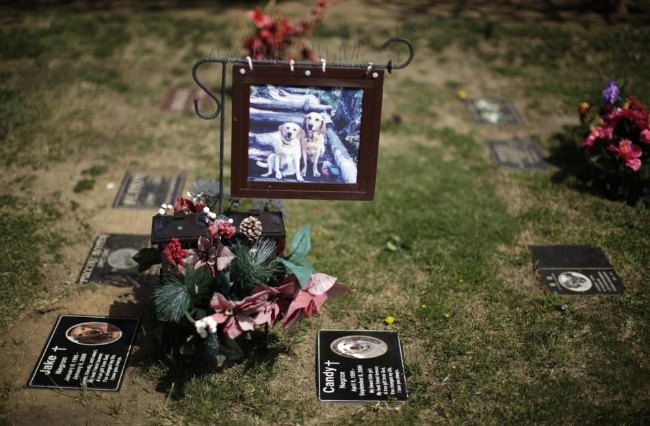 3129 Кладбища домашних животных в США