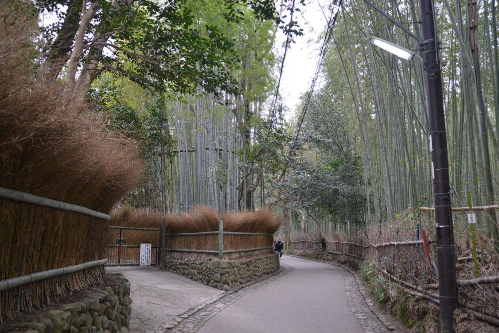 3138 Бамбуковый коридор у подножья горы в Киото