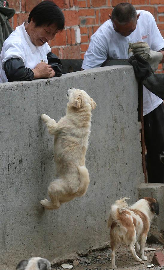 3151 Приют для бродячих животных в Нанкине