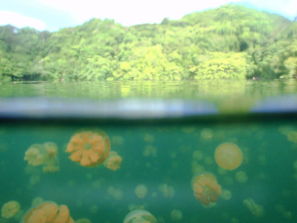 3159 Озеро медуз