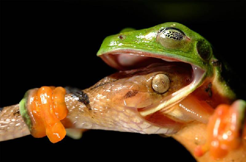 3181 40 самых удачных фотографий животных, сделанных в нужный момент