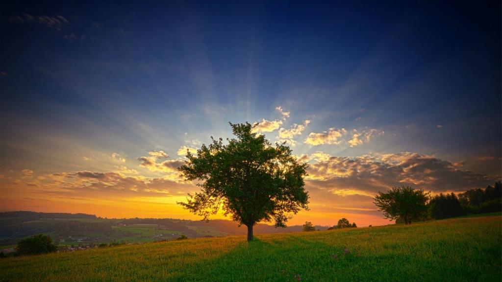 3194 Одинокие деревья на полях