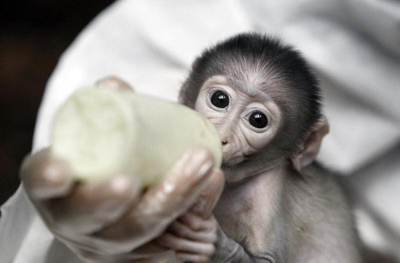 3201 Очень стеснительная обезьянка