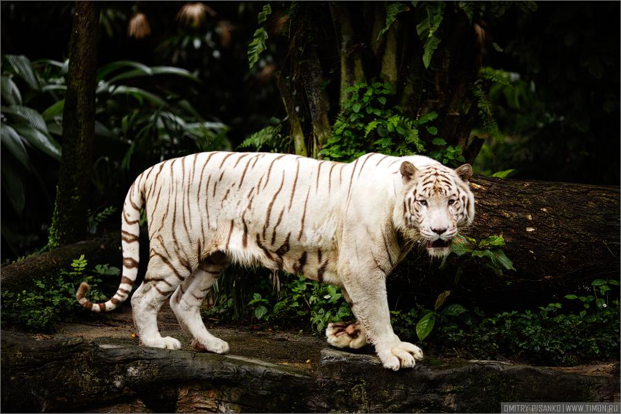 3238 Самый открытый зоопарк мира