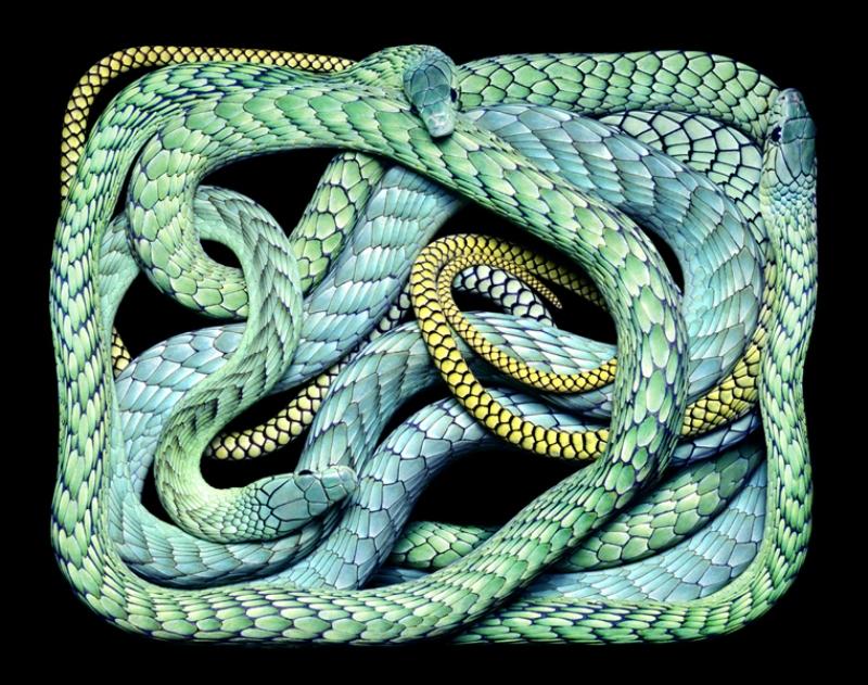 3513 Змеиная коллекция Гвидо Мокафико