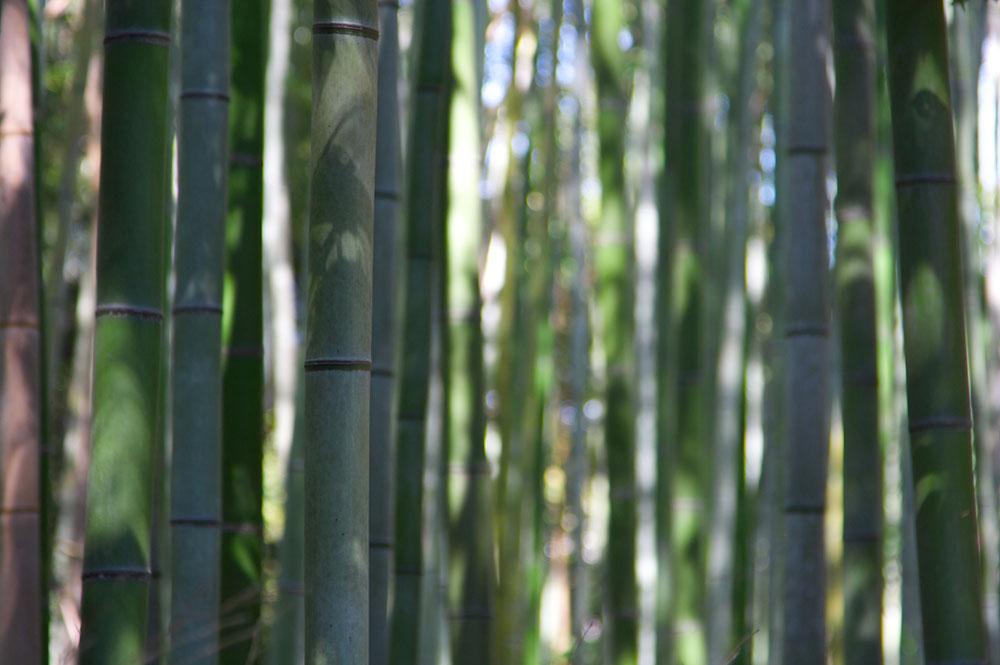 3572481505 22ed3e31cb o Бамбуковый коридор у подножья горы в Киото